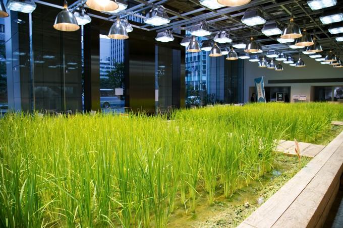 パソナグループ東京本社の畑。日本一地価の高い畑ということを聞きました
