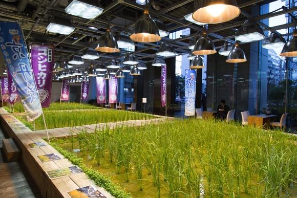 パソナグループ東京本社の1Fには畑があります