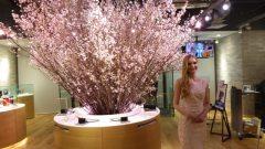 ソニーストアに桜が咲いています