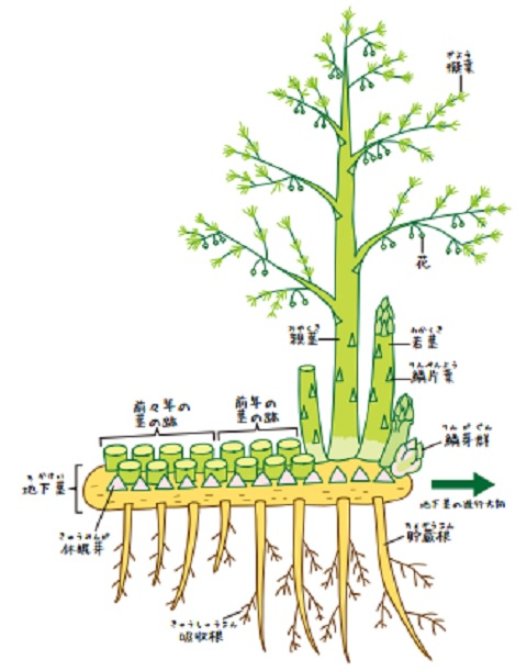 こもれび栽培の仕組み