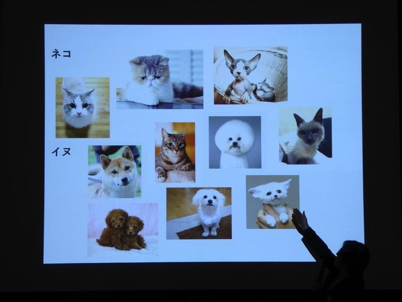 写真を見て、犬と猫を判別する事例