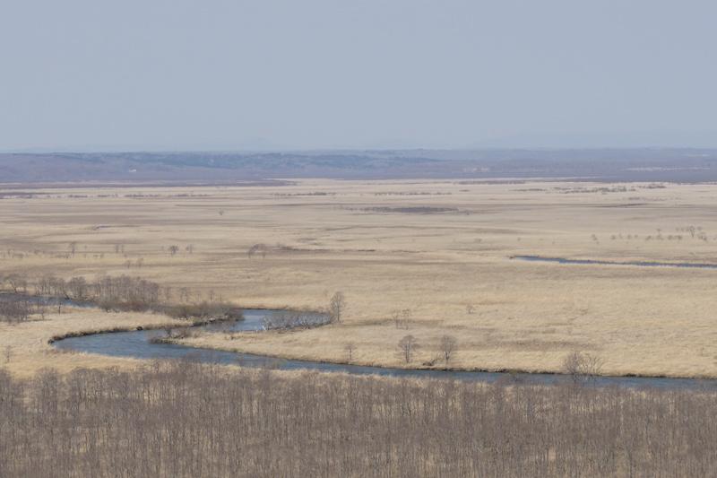 寒々しい釧路湿原の様子