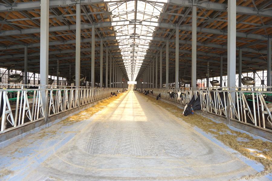 希望農場の牛舎